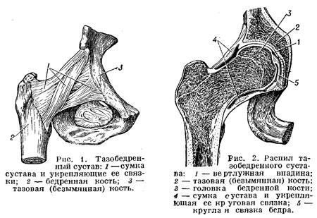 напр., задние связки коленного С. (Сустав) не позволяют производить...