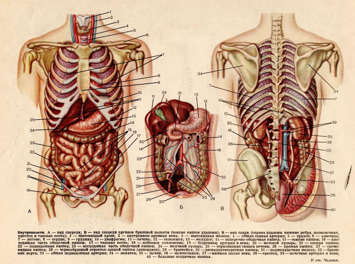 Посмотреть картинки половые органы 15 фотография